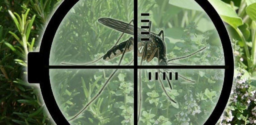 Tanaman Pengusir Nyamuk